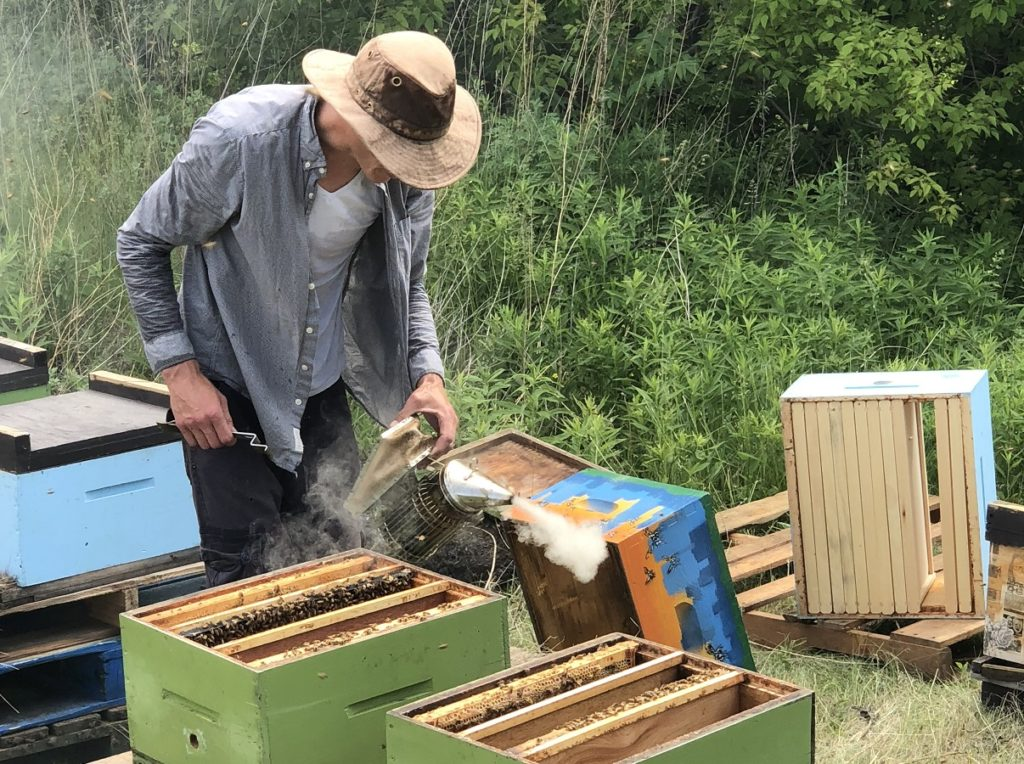 Port Lands Home to New Honeybee 'Queendoms'