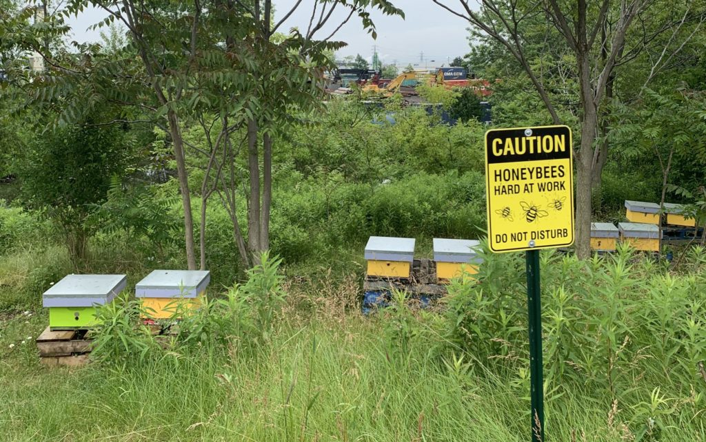 Honeybees flourish at Port of Hamilton